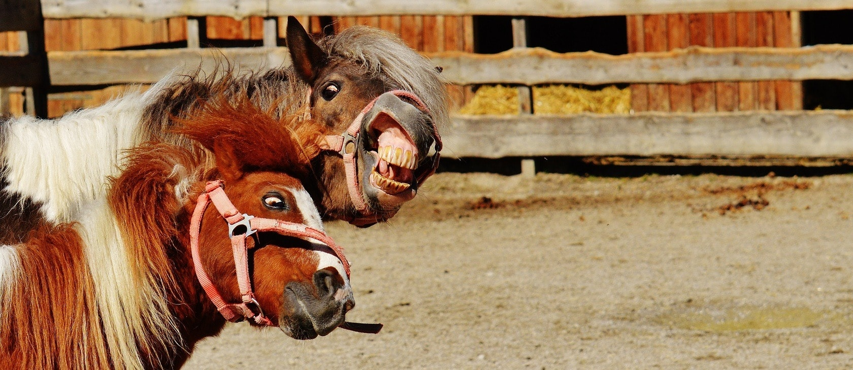 100 Funny Horse Names Ideas For Comical Silly Horses Pet Keen
