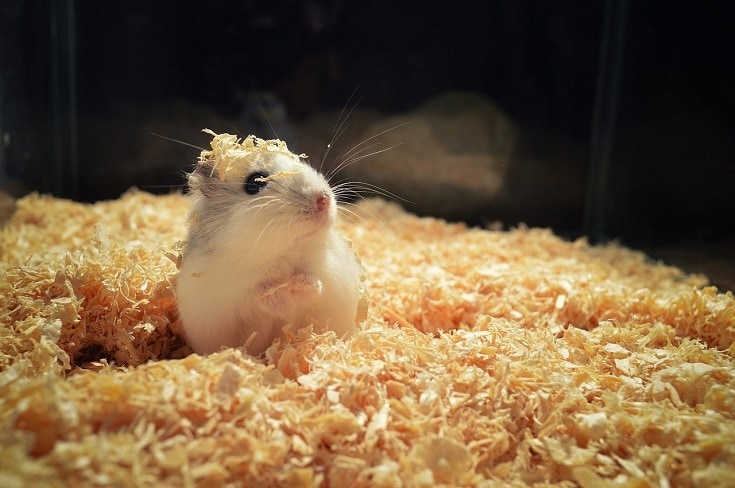 5 Alternatives To Hamster Bedding Found, Can You Use Shredded Paper For Hamster Bedding