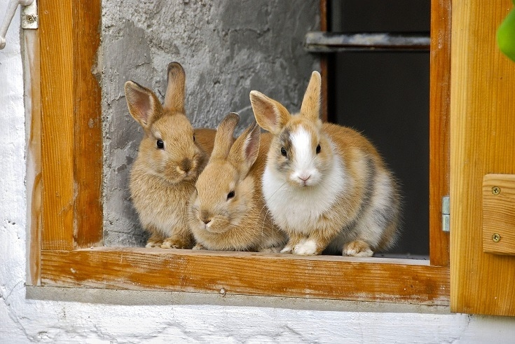 Rabbits on window