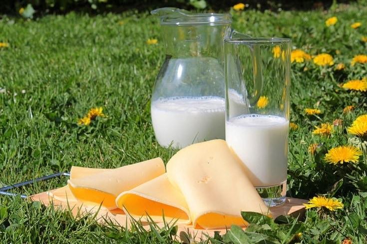 Cheese milk