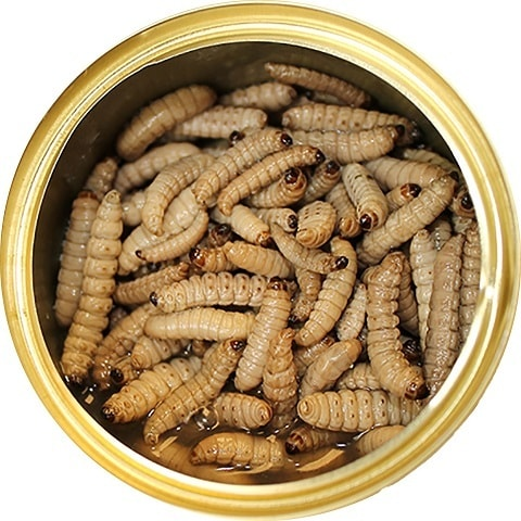 Exotic Nutrition Wax Worms Canned Hedgehog Treats