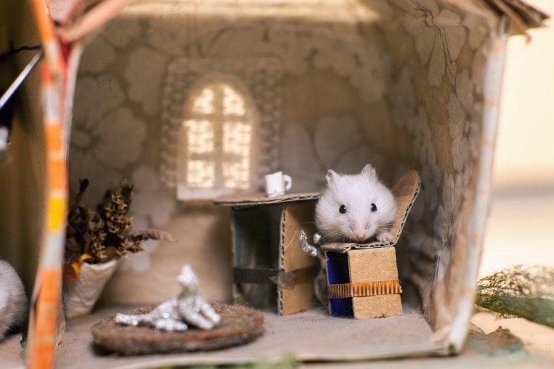 Funny little white hamster sitting on a chair in the kitchen_szymon kaczmarcyzk_shutterstock