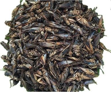 Hatortempt Dried Crickets
