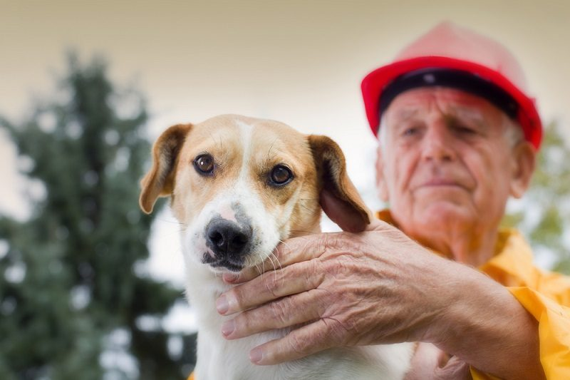 Old man rescuing dog from natural disaster_budimir jevtic_shutterstock