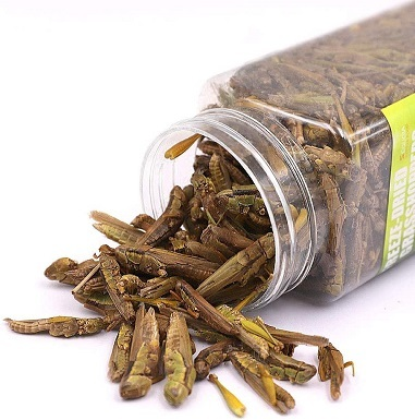 Sequoia Freeze Dried Grasshopper