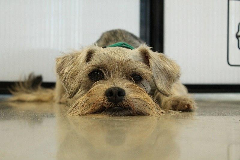 dog rescue sad pixabay