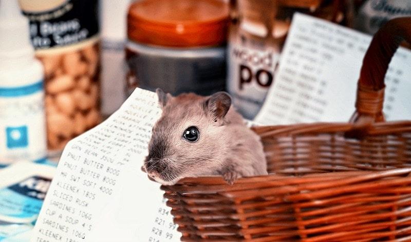hamster shelves pixabay