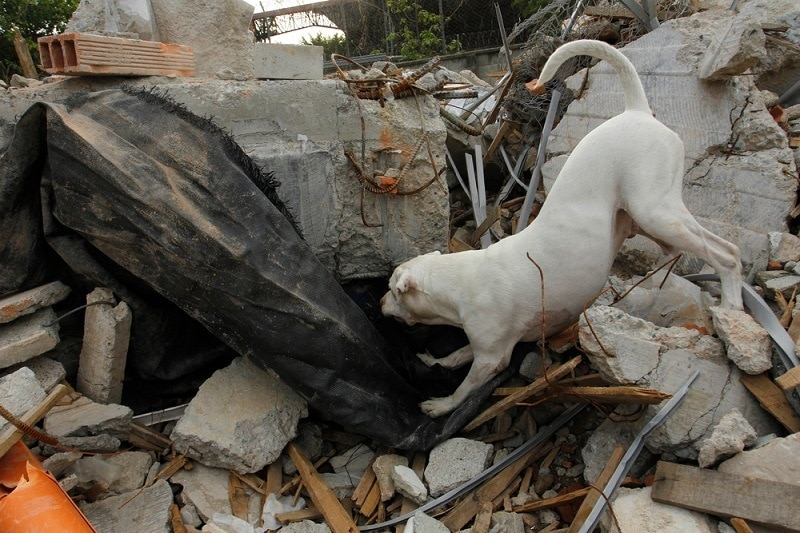 white pit bull rescue dog_perla sofia_shutterstocl