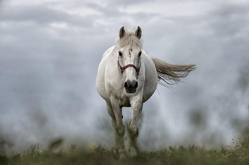 5horse