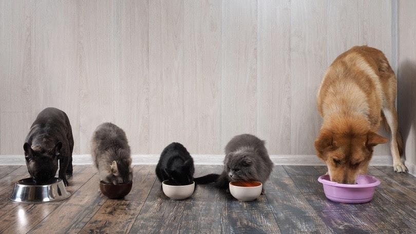 cats and dogs eat pet food_Irina Kozorog_shutterstock
