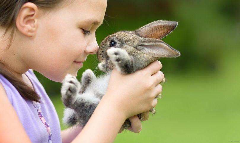 cute little rabbit_Serhiy Kobyakov_shutterstock