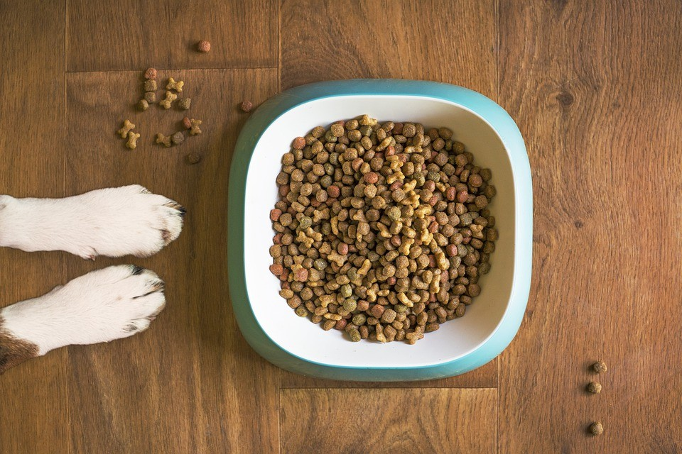 paws and dog food