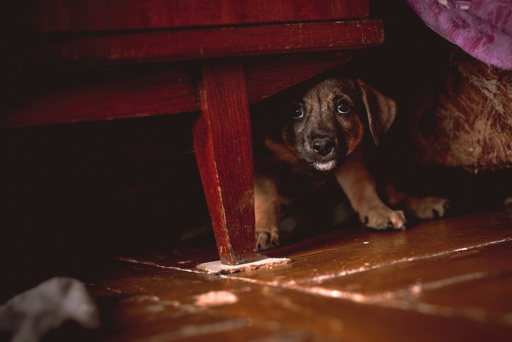 scared puppy
