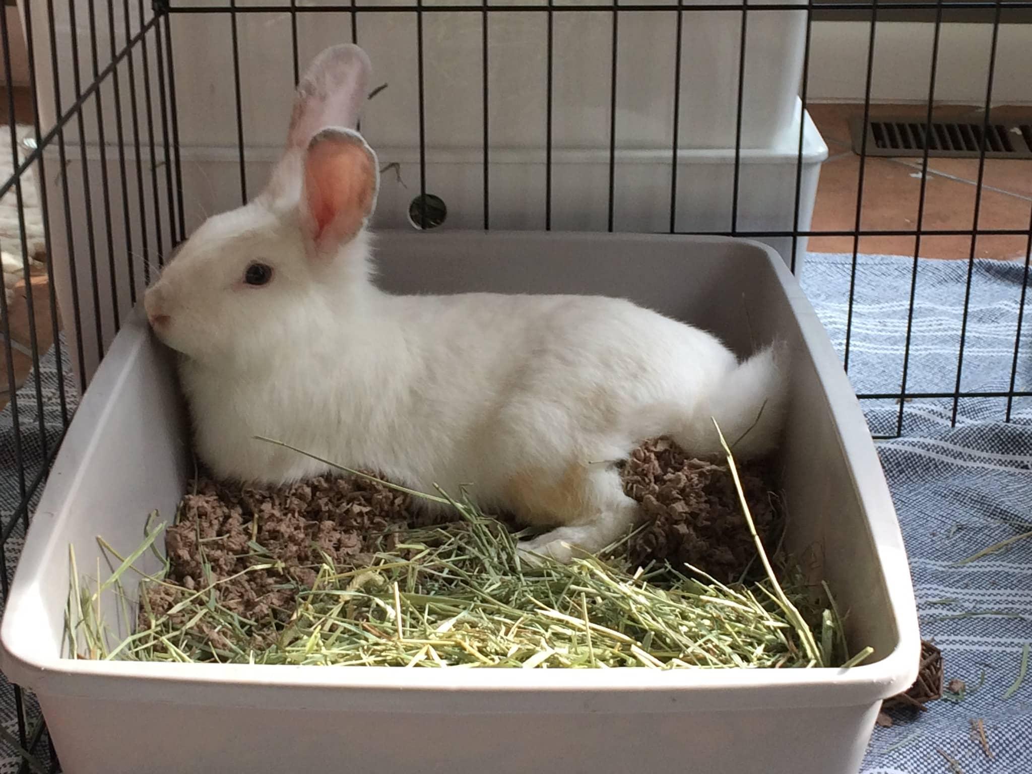 20 Best Litter For Rabbits October 20   Reviews, Top Picks & Guide