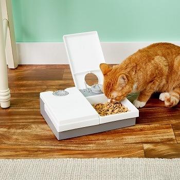Best Autimatic Cat Feeder