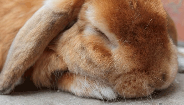 10 Best Bedding For Rabbits August, Can Rabbits Have Red Cedar Bedding
