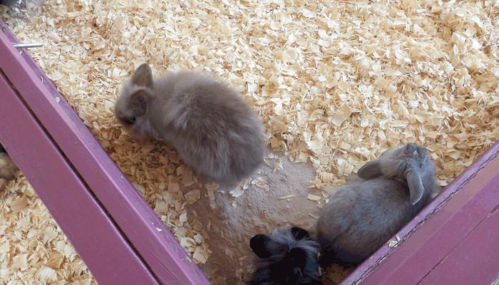 Rabbits in litter