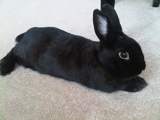 Black Mini Satin Rabbit
