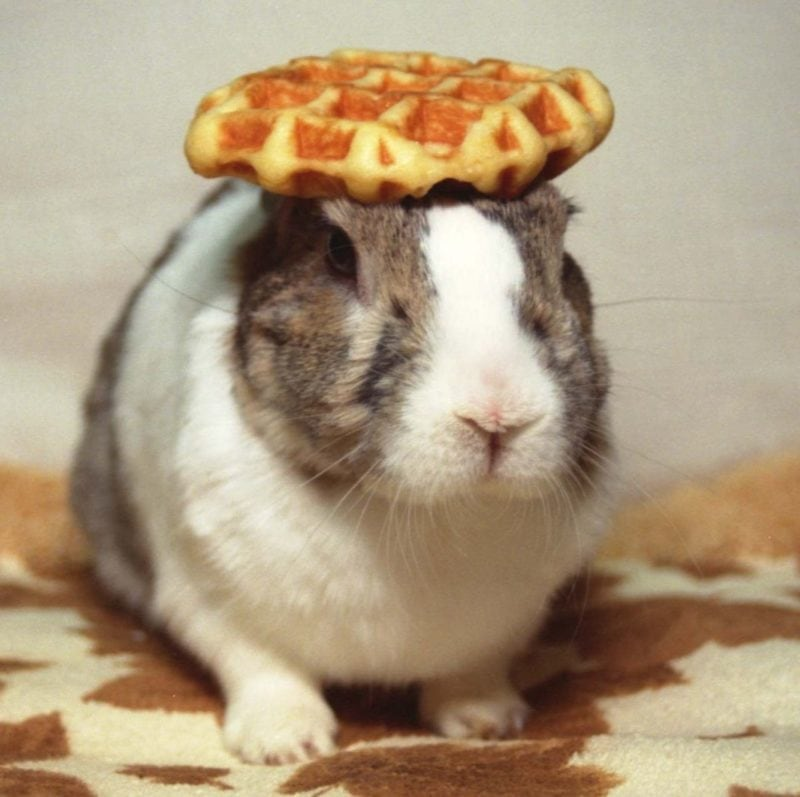 Funny rabbit picture with waffle
