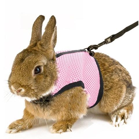 Calunce A1011007 Soft Rabbits Harness