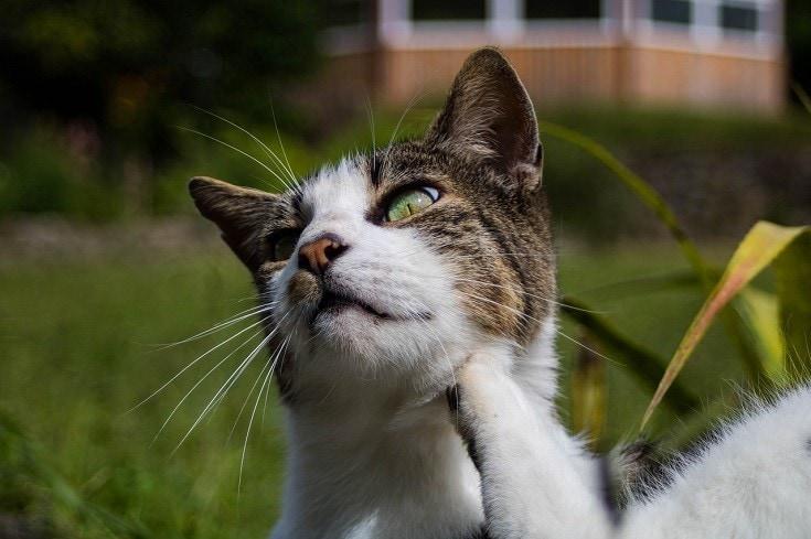Cat scratching close up