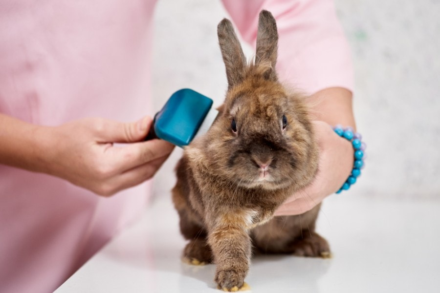 Closeup of woman brushing little brown rabbit_denys kurbatov_shutterstock