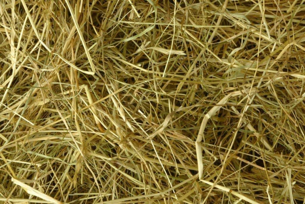 Compressed Meadow Hay-Pettex-Amazon