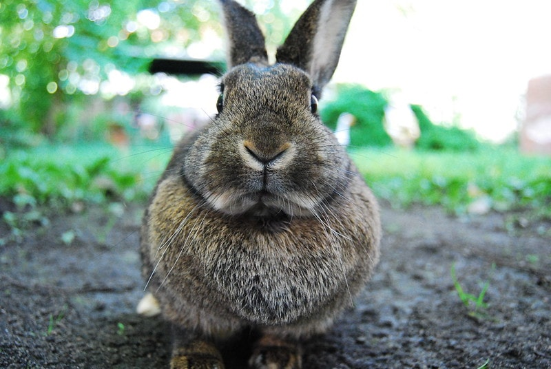 Funny rabbit picture straight on
