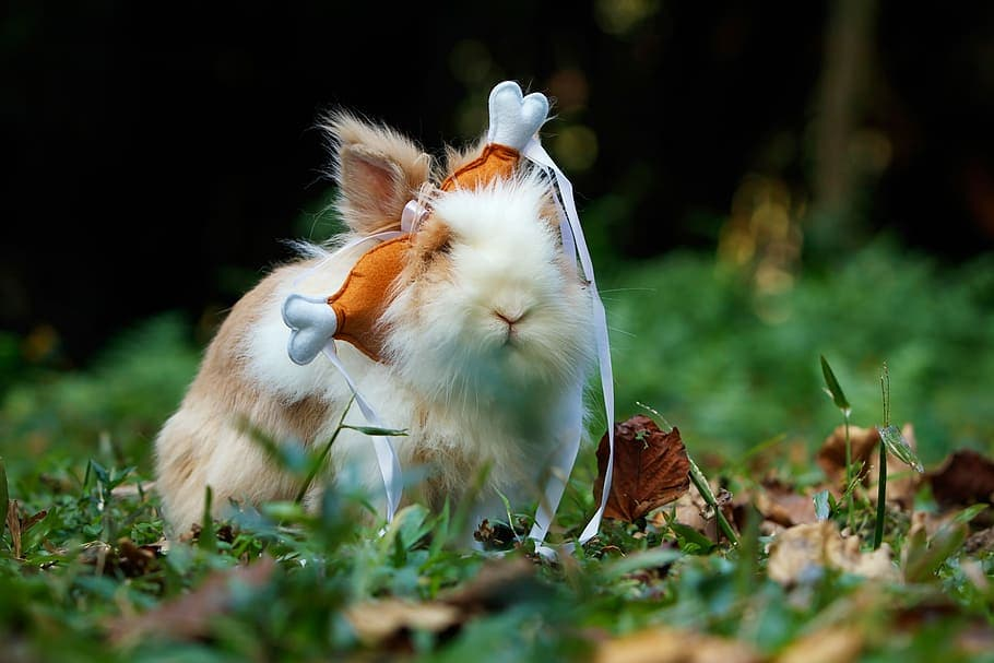 Funny rabbit picture with turkey leg hat