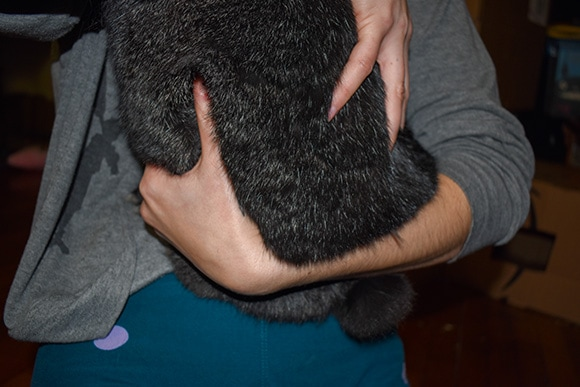Holding Rabbit Under Bottom