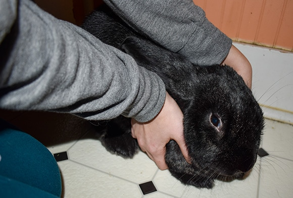 Holding Rabbit Under Chest