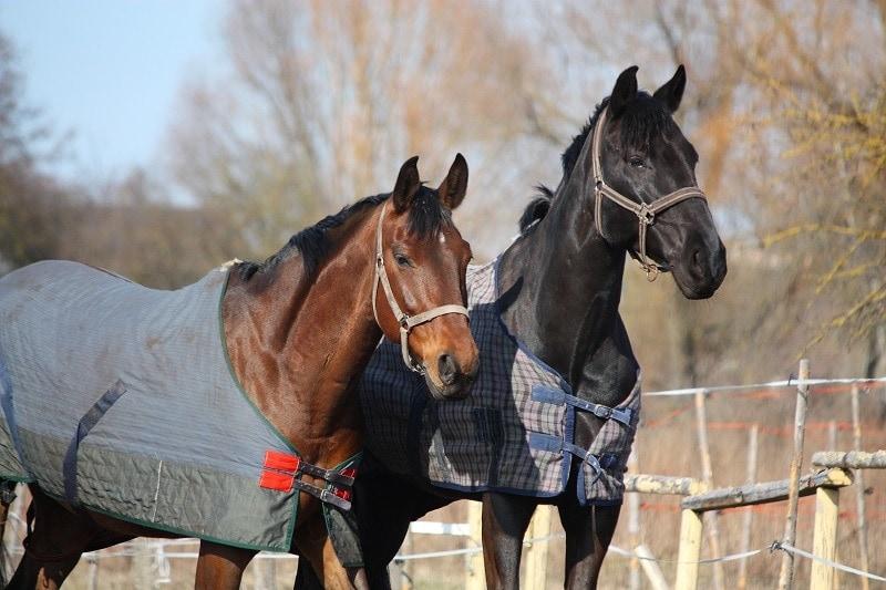 Horses with Blanket_Anastasija Popova
