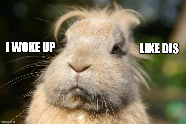 silly rabbit memes woke up