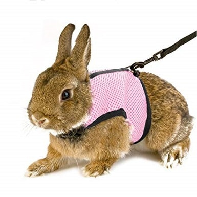 Petacc Rabbit Harness Leash Set Adjustable Pet Harness and Leash