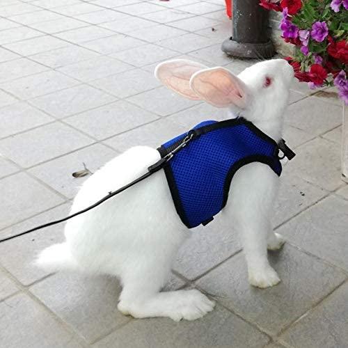 Pettom Bunny Rabbit Harness