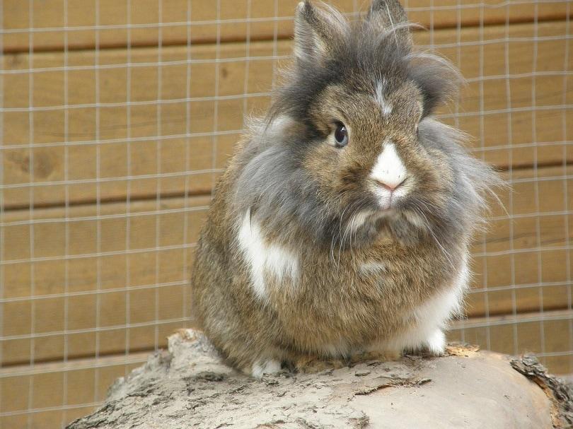 Rabbit Playpen