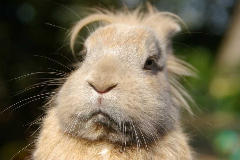 Funny rabbit picture with bad hair