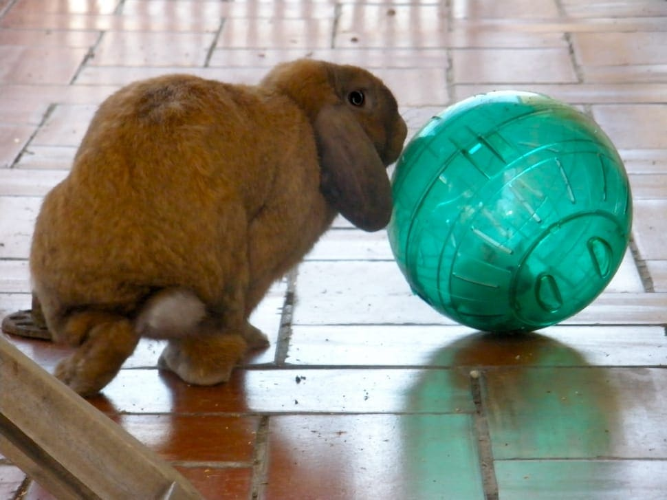 Rabbit playing ball
