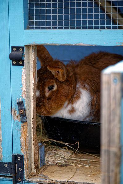 Rabbit_hutch_at_Boreham,_Essex,_England_2