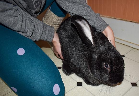 Releasing a Rabbit