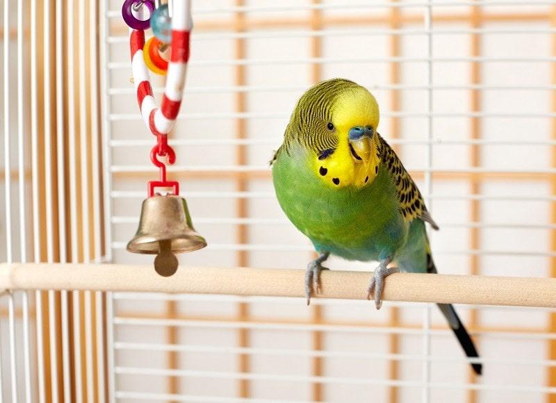 Toys for Parakeet_shutterstock_kurhan