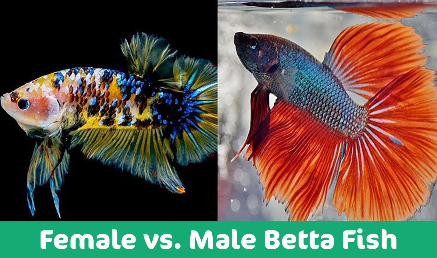 female-vs-male1
