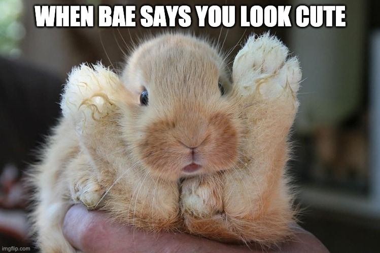 Funny rabbit memes cute