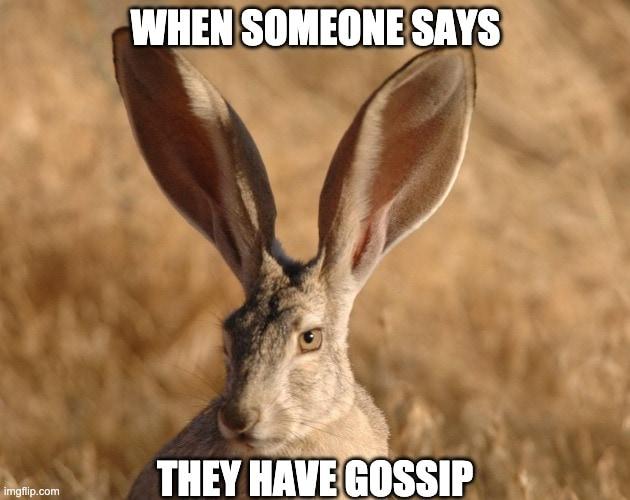 Funny rabbit memes gossip