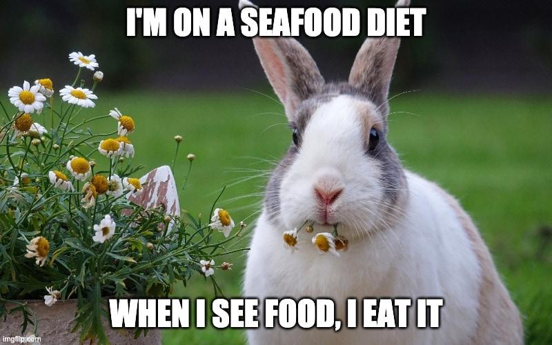 rabbit memes seafood diet