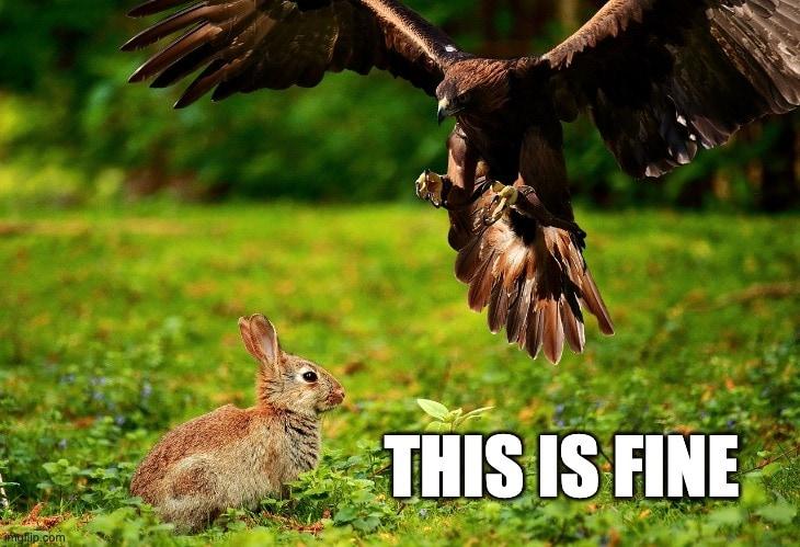 optimist rabbit meme this is fine