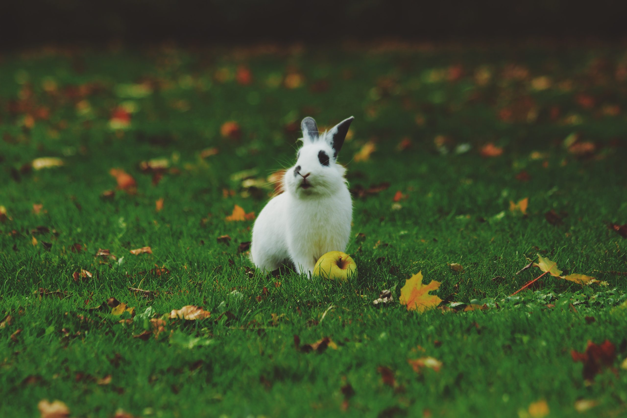 rabbit holding an apple