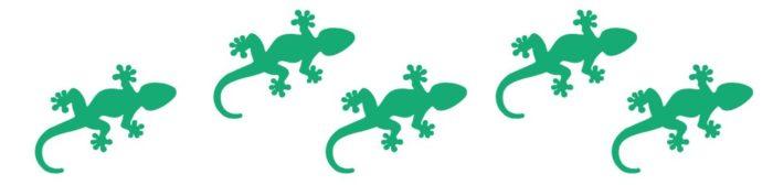 divider- gecko