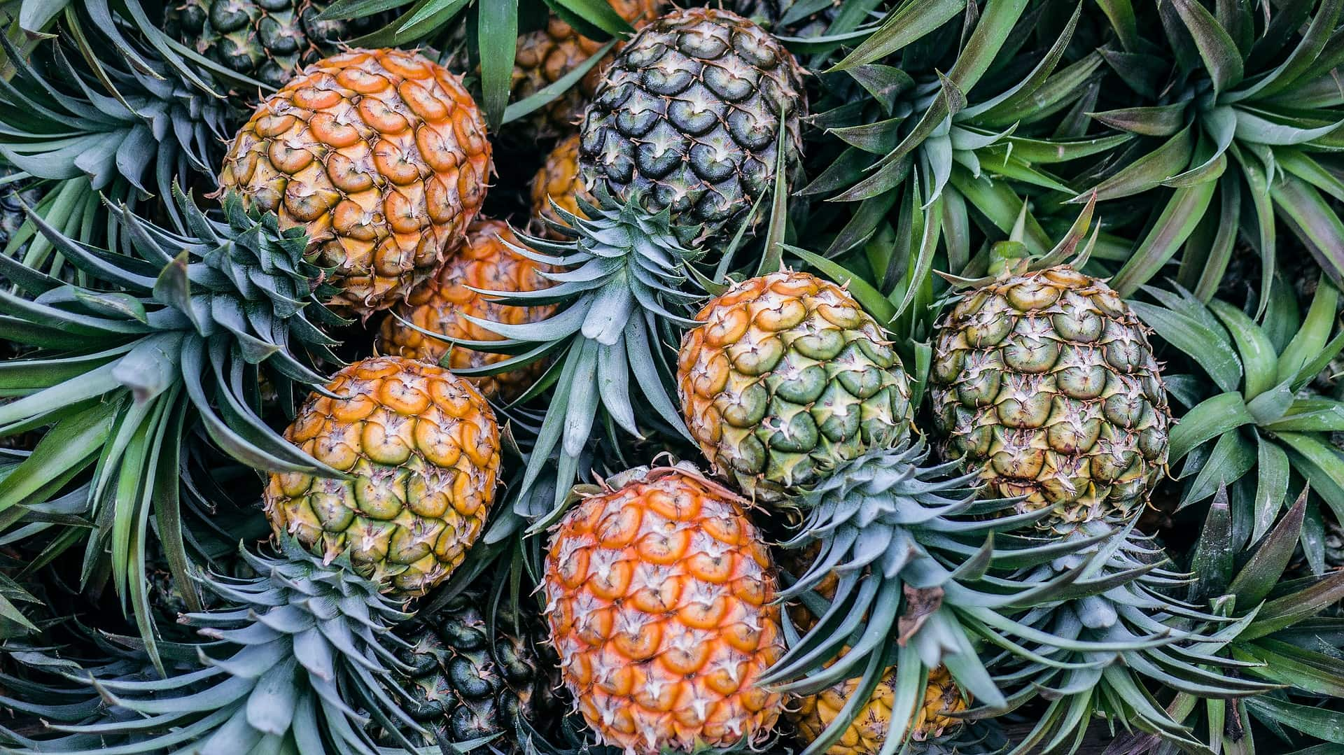 Can Rabbits Eat Pineapples What You Need to Know   Pet Keen
