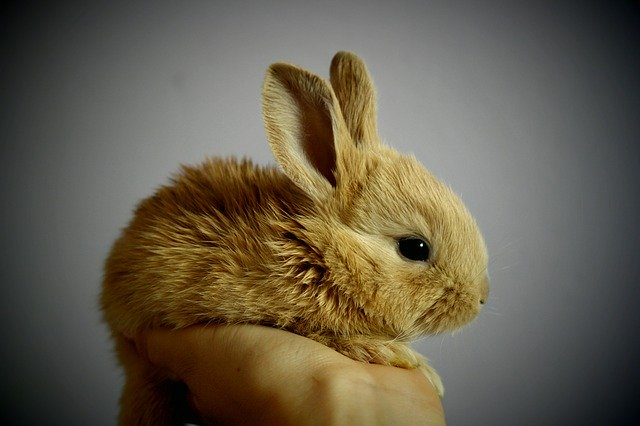 bunny in one hand
